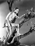 Johnny Weissmuller Climbing a Tree in a Movie Scene Photo by  Movie Star News