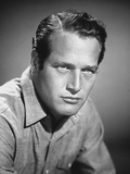 Paul Newman Portrait in Black and White Photo by  Movie Star News