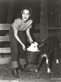 Dorothy Lamour Feeding in Classic Photo by  Movie Star News