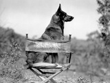 Rin Tin Tin Seated on Chair Photo by  Movie Star News