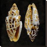 Golden Ocean Gems I Stretched Canvas Print by Caroline Kelly