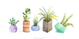 Succulent Display I Prints by Rebekah Ewer