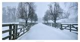 Snowy Road II Prints by James McLoughlin