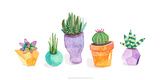 Succulent Display II Posters by Rebekah Ewer