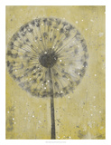 Dandelion Abstract II Prints by Tim O'toole