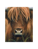 Cow Portrait Prints by Sarah Stribbling