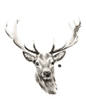 Elk Poster by Philippe Debongnie