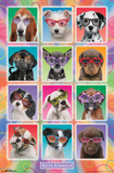 Keith Kimberlin- Puppies In Sunglasses Poster by Keith Kimberlin