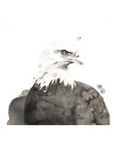 Eagle Print by Philippe Debongnie
