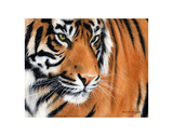 Tiger Crop Art by Sarah Stribbling
