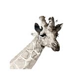 Giraffe Impressão giclée por Philippe Debongnie