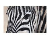 Zebra Eyes Posters af Sarah Stribbling