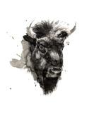 Bisonti e bufali Stampe di Philippe Debongnie
