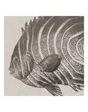 Vintage Fish II Posters by  Sparx Studio