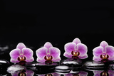 Set of Four Orchid with Therapy Stones Photographic Print by  crystalfoto