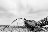 Fallen Tree on the Beach after Storm. Sea on a Cloudy Day. Black and White, far Horizon. Photographic Print by PHOTOCREO Michal Bednarek