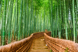 Kyoto, Japan at the Bamboo Forest. Photographic Print by  SeanPavonePhoto