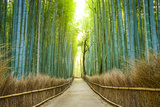 Kyoto, Japan Bamboo Forest. Photographic Print by  SeanPavonePhoto