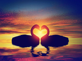 Two Swans Making a Heart Shape at Sunset. Valentine's Day Romantic Concept Photographic Print by PHOTOCREO Michal Bednarek