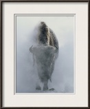 Ghostly Bison in Steam During Winter, Yellowstone National Park Framed Photographic Print by Norbert Rosing