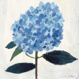 From My Garden - Hydrangea Giclee Print by Charlotte Hardy