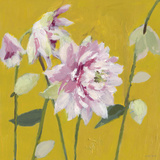 From My Garden - Aquilegia Giclee Print by Charlotte Hardy