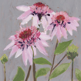 From My Garden - Echinacea Giclee Print by Charlotte Hardy