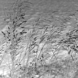 Patmos Grasses Giclee Print by Tony Koukos