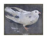 Le pigeon Reproduction giclée Premium par Joseph Crawhall