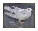 The Pigeon Premium Giclee Print by Joseph Crawhall