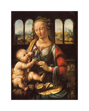 Madonna of the Carnation Premium Giclee Print by Leonardo Da Vinci