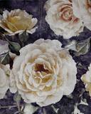 Rose Dream II Giclee Print by  Collezione Botanica