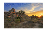 Lantern Press - Joshua Tree National Park, California - Sunrise Obrazy