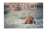 Ocean City, New Jersey - Hermit Crab on Beach Poster by  Lantern Press