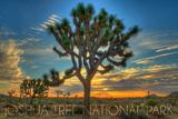 Lantern Press - Joshua Tree National Park, California - Tree in Center Plakát