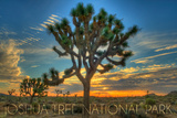 Joshua Tree National Park, California - Tree in Center Posters by  Lantern Press