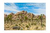 Joshua Tree National Park, California - Blue Sky and Rocks Print by  Lantern Press