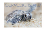 Ocracoke Island, North Carolina - Hawksbill Turtle Hatching Poster van  Lantern Press