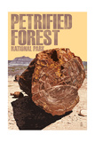 Petrified Forest National Park, Arizona - Petrified Wood Close Up Art by  Lantern Press