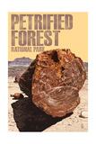 Petrified Forest National Park, Arizona - Petrified Wood Close Up Art by  Lantern Press