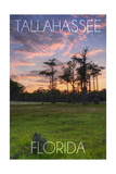 Tallahassee, Florida - Cypress and Sunset Poster by  Lantern Press