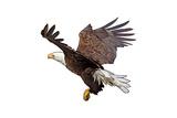 Bald Eagle Landing - Icon アート : ランターン・プレス