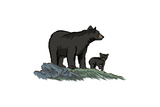 Black Bear and Cub - Icon Prints by  Lantern Press