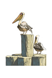 Pelican and Pilings - Icon Art by  Lantern Press