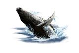 Humpback Whale - Icon Prints by  Lantern Press