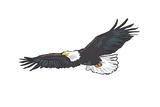 Bald Eagle Soaring - Icon ポスター : ランターン・プレス