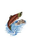 Red Salmon - Icon Prints by  Lantern Press