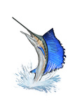 Sailfish - Icon Poster by  Lantern Press