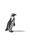 Black-Footed Penguin - Icon Poster by  Lantern Press