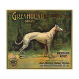 Greyhound Brand - San Dimas, California - Citrus Crate Label Posters by  Lantern Press